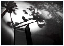 Shadows. Flower Shadows on the wall stock photography