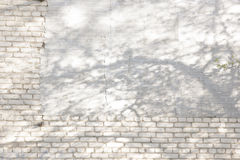 Shadows from foliage on a brick wall Stock Images