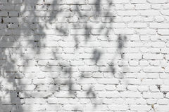 Shadows from foliage on a brick wall Stock Image