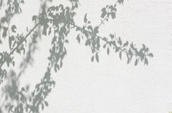 Shadows from foliage on a plastered wall Royalty Free Stock Image