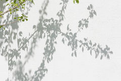 Shadows from foliage on a plastered wall Royalty Free Stock Photography