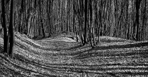 Shadows in the forest. Lights and shadows in the forest Stock Photography