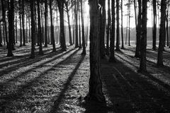 Shadows In The Forest Royalty Free Stock Images