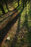 Shadows in the forest Stock Photography