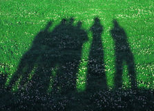 Shadows on a grass Royalty Free Stock Photo