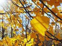 Shadows of the light. Leaves turning yellow in autumn Royalty Free Stock Images