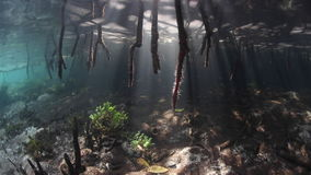Shadows and Light in Tropical Mangrove Forest. Beams of sunlight shine on the edge of a mangrove forest in Raja Ampat, Indonesia. This tropical region is known stock video