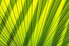 Shadows lighting effects  of leaves  palm Royalty Free Stock Photo
