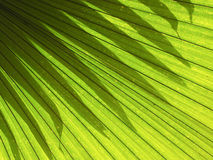 Shadows lighting effects of leaves palm Stock Photos