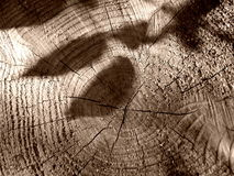 Shadows of the missing branches. Leaf shadows on a cut tree Royalty Free Stock Photos
