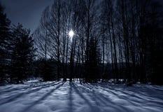Free Shadows On Snow Royalty Free Stock Photos - 23329518