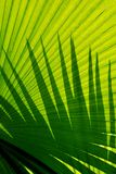 Shadows on palm frond. Vibrant green palm leaf abstract background Royalty Free Stock Photo