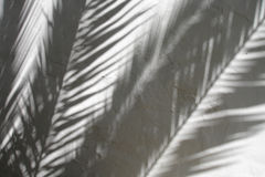 Shadows of palm leaves on textured wall Royalty Free Stock Photo