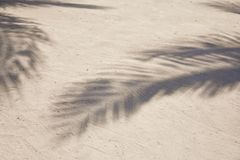Shadows of palm tree fronds fluttering on textured sand beach. Caribbean Sea. Riviera Maya Mexico.  Royalty Free Stock Photography