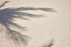 Shadows of palm tree fronds fluttering on textured sand beach. Caribbean Sea. Riviera Maya Mexico.  Stock Image