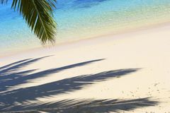 Shadows of the palm tree N2. Shadows of the palm tree on the island Gan in Indian Ocean, Maldives Stock Images