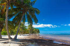 In the shadows of palm trees on Atlantic ocean shore Royalty Free Stock Photography