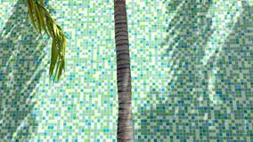 Palm Tree Shadows Green Tile Background stock video footage