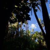 Shadows and palms in a Moroccan garden stock photo