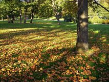 Shadows in the Park. The autumn park Royalty Free Stock Image