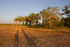 Shadows of people in love at sunset Royalty Free Stock Images