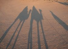 Shadows of riders on camels Royalty Free Stock Photos