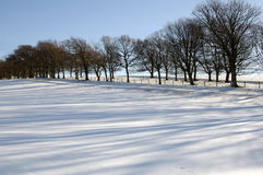 Shadows in the snow. Field covered in snow with trees and sidelit side lighting casting shadows on the snow Royalty Free Stock Photo