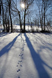 Shadows on the snow Stock Images