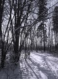 Shadows on snow. Dark trees casting shadows on the snow Stock Photography