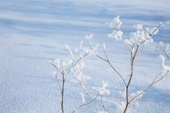 Shadows on a snow. Royalty Free Stock Photos