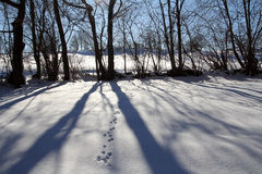 Shadows on the snow Stock Photography