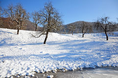 Shadows on snowy orchard royalty free stock images