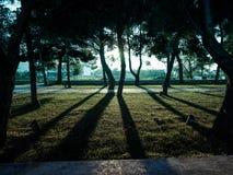 Shadows of tree Stock Photo