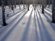 Shadows of trees. The   image of the day sun comming through silhouetted tree's casting shadows on the ground Stock Photos