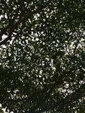 Shadows of trees Royalty Free Stock Photo