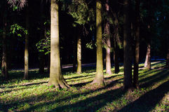 Shadows from the trees in the forest. Stock Photos