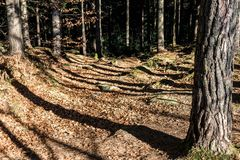 The shadows of the trees on the path. Horizontal frame royalty free stock photos