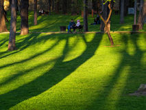 Shadows of the Trees and People Stock Images
