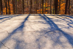 Shadows of trees on road Royalty Free Stock Photography