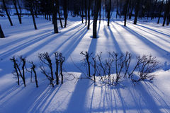 Shadows from trees on snow in evening park Royalty Free Stock Images
