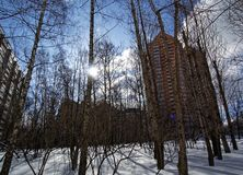 Shadows from the trees on the snow in winter Park. Moscow royalty free stock photo