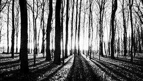 Shadows of trees in spring forest Royalty Free Stock Photography