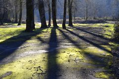 Shadows on vacant lot. Shadows on a moss-covered vacant lot Royalty Free Stock Image