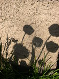 Shadows on the wall Royalty Free Stock Image