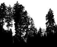 Shadowtrees Royalty-vrije Stock Foto's