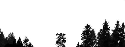 Shadowtrees panorama Royalty Free Stock Photos