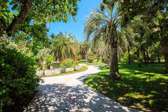 Shady alley in the arboretum of Sochi, Russia, summer day. The arboretum in Sochi, Russia, summer day Royalty Free Stock Photos