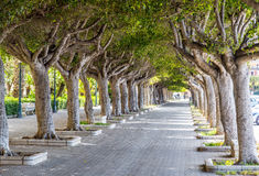 Shady alley in the city center of Trapani in Sicily Royalty Free Stock Photos