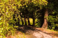 Shady alley in Sochi Arboretum, Russia. Shady alley with curved footpath in Sochi Arboretum in sunny day, Russia Royalty Free Stock Images