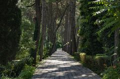 Shady alley in the summer park. Wood, forest, tree, outdoor, green, natural, landscape royalty free stock images